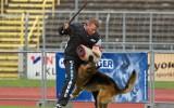 31.08.2012, 27V, BSZS-2012, Ulm, TSB-Überprüfung, Richter SV: TSB- P. Art, im Ring- H. Setzer