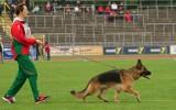 02.09.2012, 27V, BSZS-2012, Ulm, im Ring mit Rita Turova, Richter SV - H. Setzer