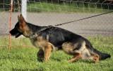 22.05.2010, Jachroma MG, 1VV in der Baby Klasse; Richter SV - L. Quoll